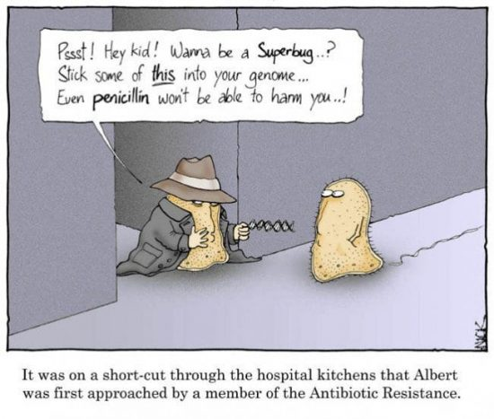 Cartoon of two bacteria