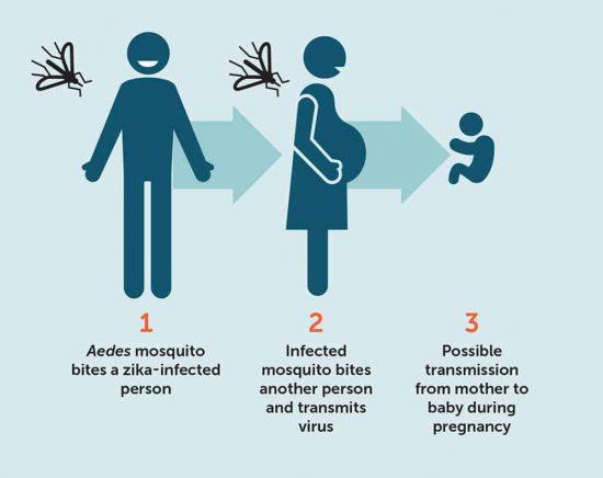 transmission of zika virus