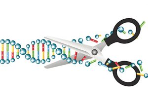 scissors cutting up a double helix