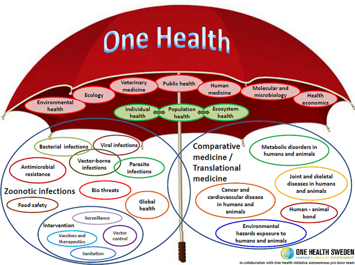 A depiction of the One Health concept.
